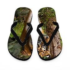 Tiger walking Flip Flops