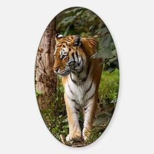 Tiger walking Sticker (Oval)