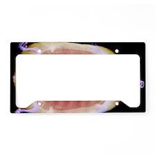Turtle License Plate Holder