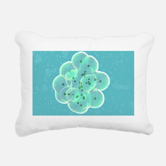 Embryo formation Rectangular Canvas Pillow