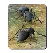 Tropical ants, SEM Mousepad