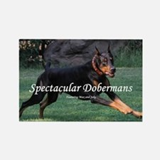 Spectacular Dobermans Rectangle Magnet