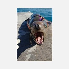 US Navy California sea lion Rectangle Magnet
