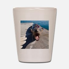 US Navy California sea lion Shot Glass