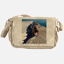 US Navy California sea lion Messenger Bag