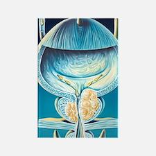 Enlarged prostate gland Rectangle Magnet