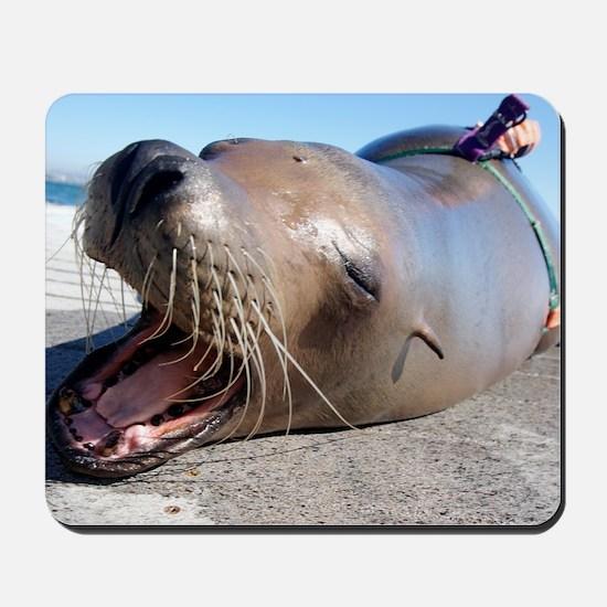 US Navy California sea lion Mousepad
