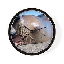 US Navy California sea lion Wall Clock