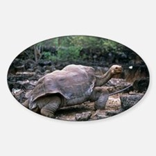 View of a giant Galapagos tortoise, Sticker (Oval)