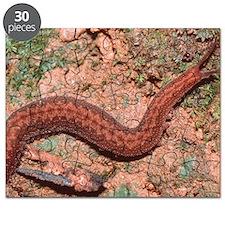 Velvet worm Puzzle