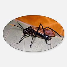 Wasp mimic bush cricket Sticker (Oval)