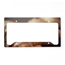 Ginger root License Plate Holder