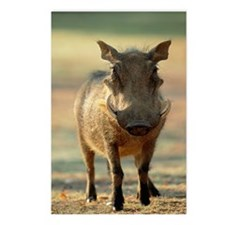 Warthog Postcards (Package of 8)