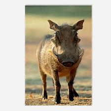 Warthog Postcards (Package of 8)