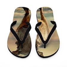 Warthog Flip Flops