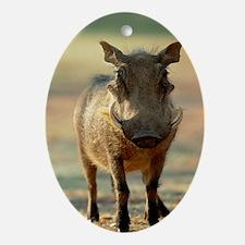 Warthog Oval Ornament