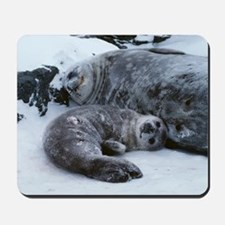Weddell seal mother with pup Mousepad