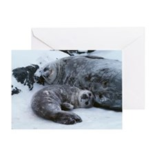 Weddell seal mother with pup Greeting Card