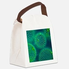Volvox colonies Canvas Lunch Bag