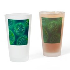 Volvox colonies Drinking Glass