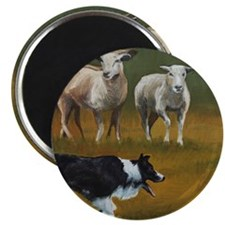Border Collie and Sheep Magnet