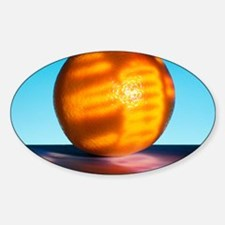 Genetically modified orange Sticker (Oval)