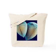 Water fleas, SEM Tote Bag