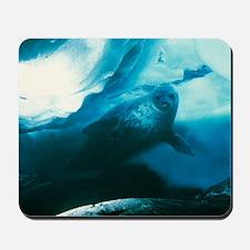 Weddell seal Mousepad