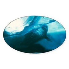 Weddell seal Decal