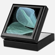 Wasp wings, SEM Keepsake Box