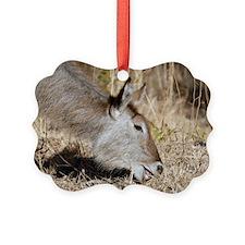 Waterbuck female Ornament