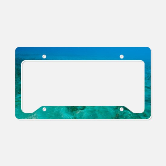 White-spotted pufferfish License Plate Holder