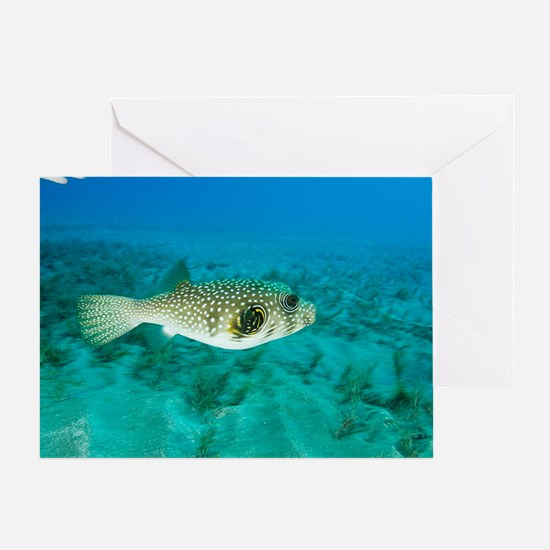 White-spotted pufferfish Greeting Card