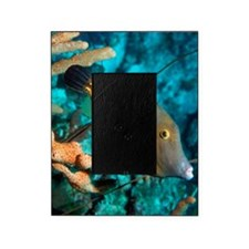 Whitespotted filefish Picture Frame