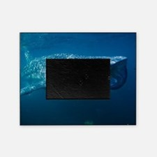 Whale shark and pilot fish Picture Frame
