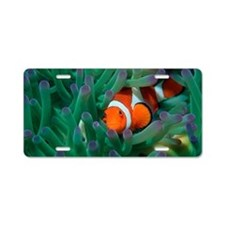 Western clown anemonefish Aluminum License Plate
