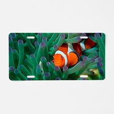 Western clown anemonefish Aluminum License Plate