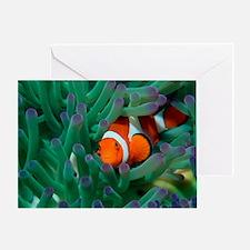 Western clown anemonefish Greeting Card