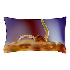 GM maize Pillow Case