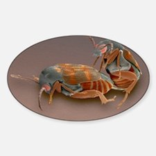 Weevils mating Decal