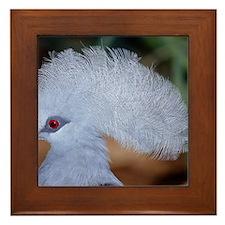 Western crowned pigeon Framed Tile
