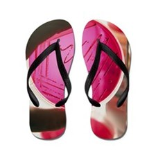 Gloved hand holds petri dish of culture Flip Flops