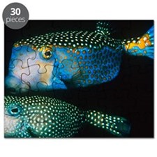 Whitespotted boxfish Puzzle
