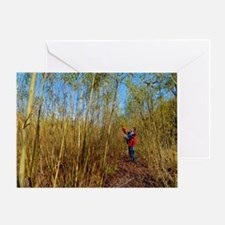 Willow grown for bioenergy Greeting Card