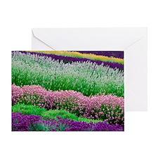 Rows of purple flowers, Washington,  Greeting Card