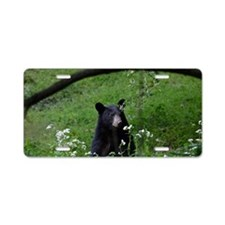 Young black bear smelling w Aluminum License Plate