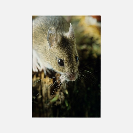 Wood mouse Rectangle Magnet