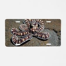 Wonderpus octopus Aluminum License Plate