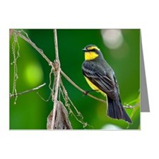 Suiriri Note Cards (Pk of 10)