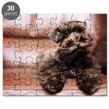 12 Week old mocha miniature schnauzer dog s Puzzle